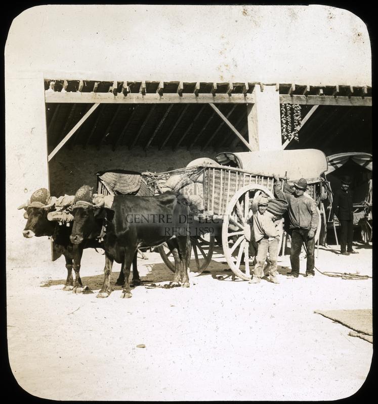 Carruatges de bous  a Monóvar