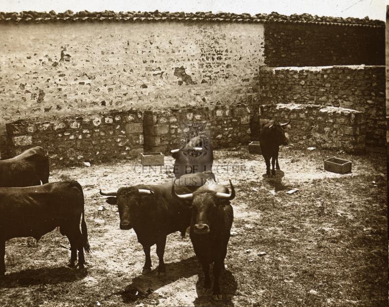 Toros de la Marquesa de Cuyas