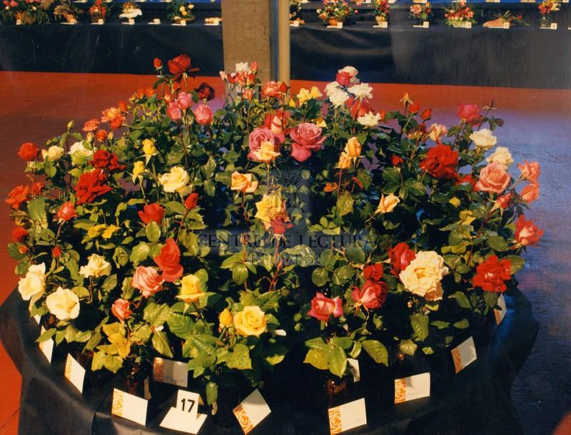 XLIXè Concurs Exposició Nacional de Roses